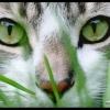 Сдам 1к квартиру  ул.Таганрогская (Стройгородок) - последнее сообщение от green eyes