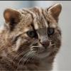 Кошки - последнее сообщение от Сев-Кав ТВ