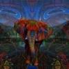 Розовый слон - Бренд№1 в Ро... - последнее сообщение от PinkElephant-Tekucheva